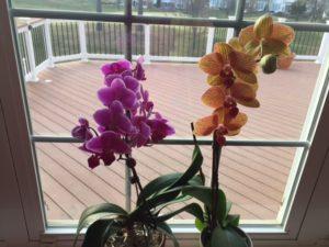 Karens orchids