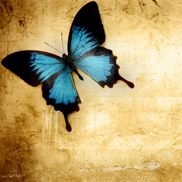 Butterfly on the Wall Series Four
