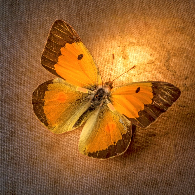 Butterfly on the Wall Series Five - Individual Coach Access